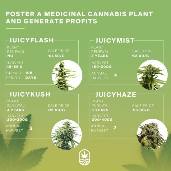 juicy fields products